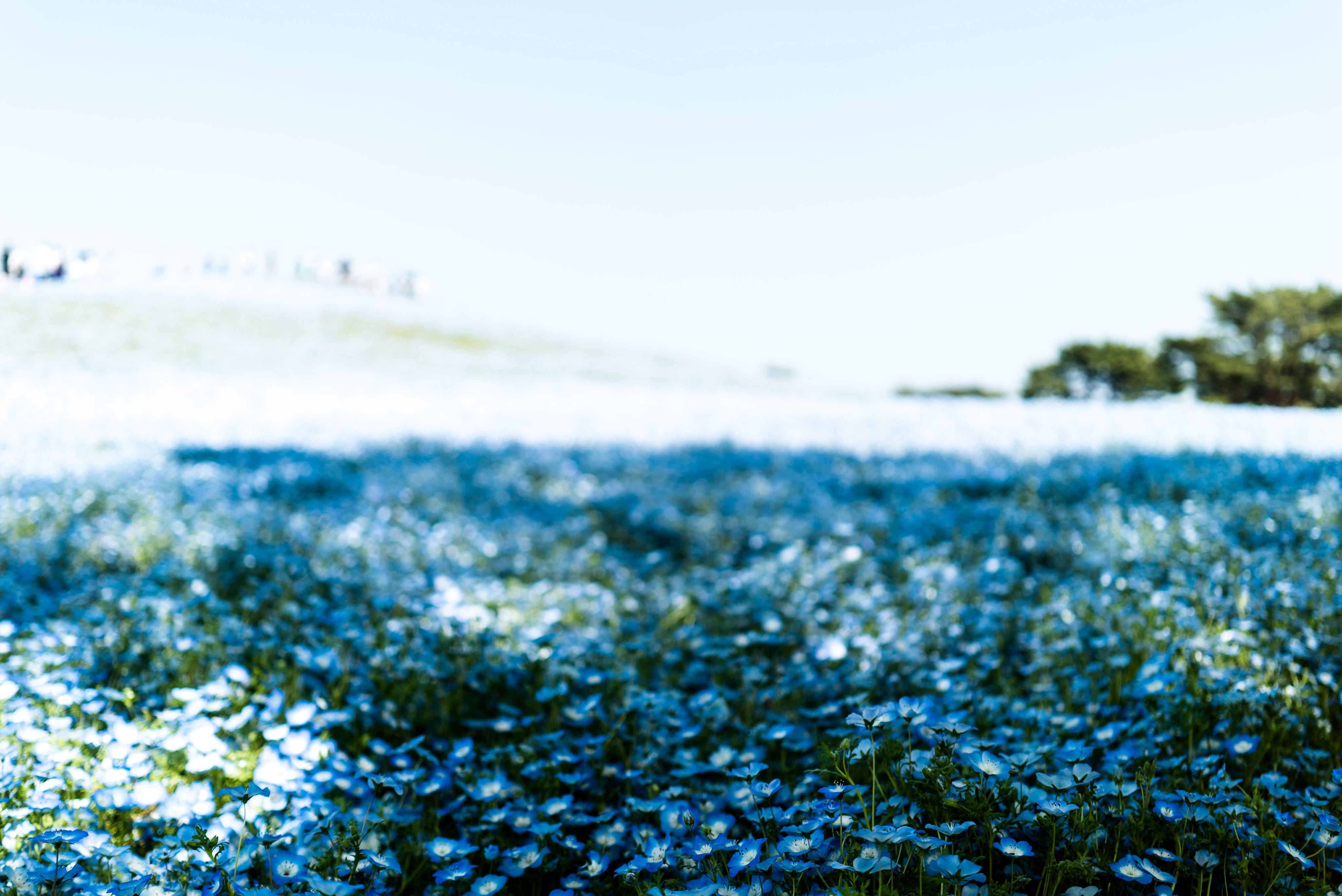 히타치해변공원